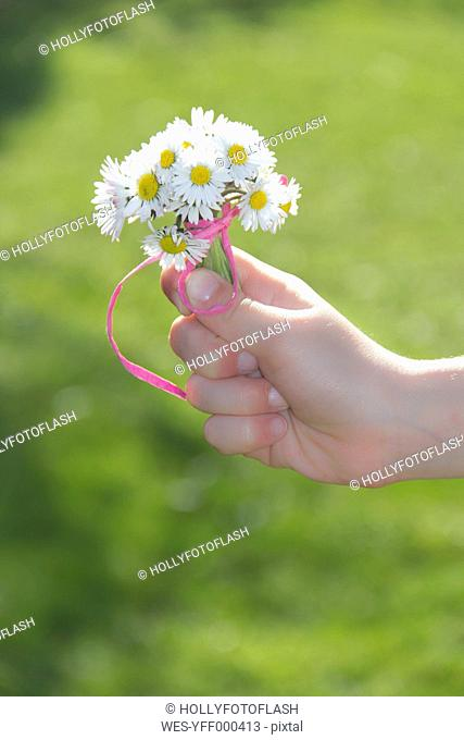 Little girl's hand holding bunch of daisys