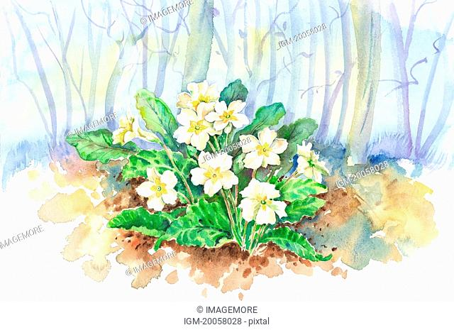 Flower, Watercolor painting of flowers in the woods