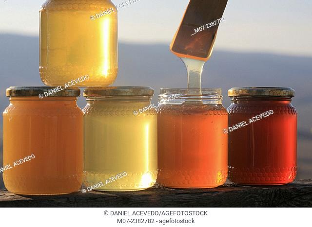 Italian Honey, Tuscany, Europe
