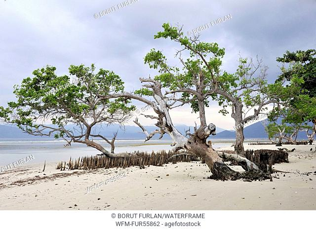 Mangroves at Low Tide, Pantar, Alor Archipelago, Indonesia