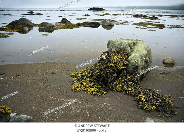 Coastal view of rocks and sea weed, Atlasova Island Bering Sea Russia, Asia
