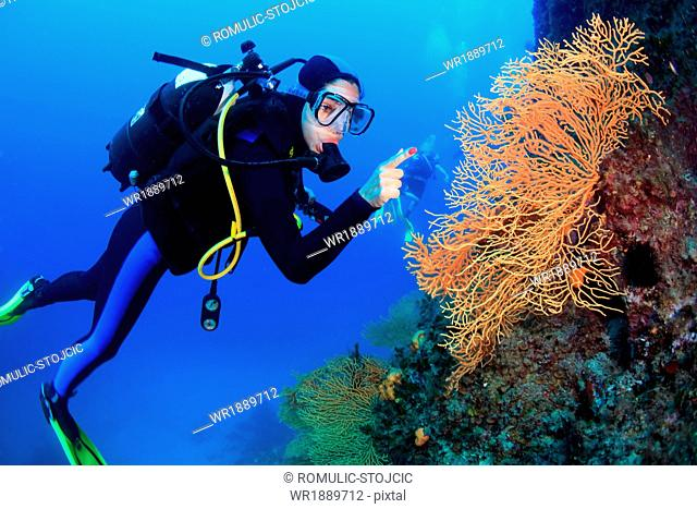 Diving, Sea Fan, Adriatic Sea, Croatia, Europe