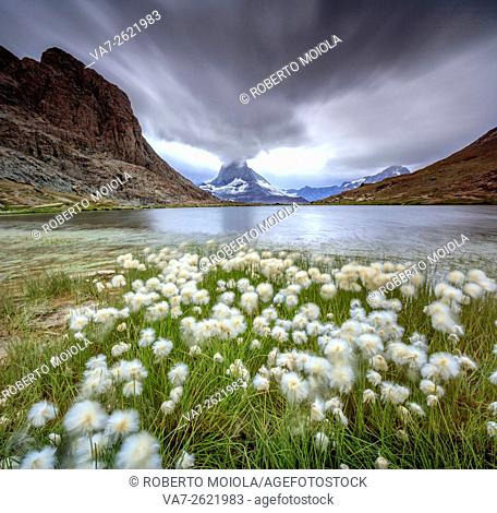 Cotton grass on lake Riffelsee while a thunderstorm hits the Matterhorn Zermatt Canton of Valais Switzerland Europe