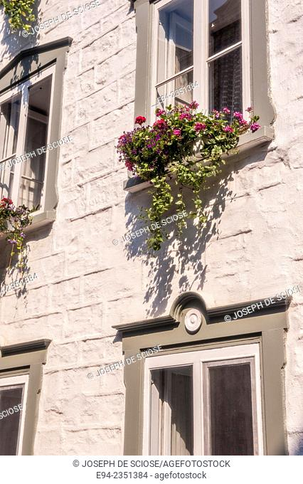 Window plant box with plants cascading down the side of a building, Quebec City, Canada