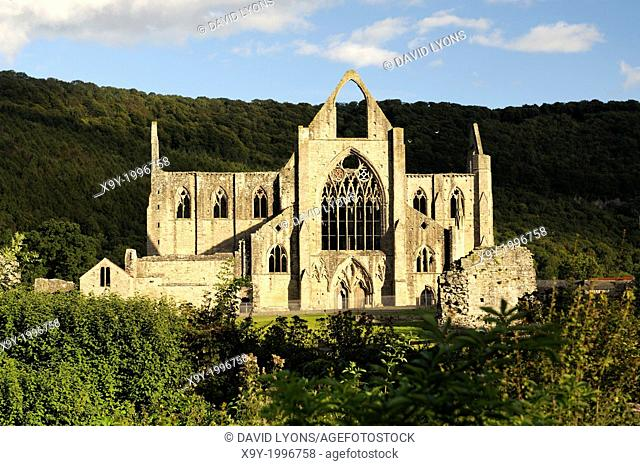 Tintern Abbey in the Wye Valley, Monmouthshire, Wales, UK. Cistercian Christian monastery founded 1131. Summer evening sunshine