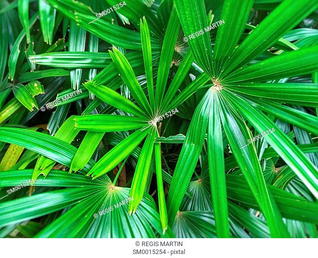 Close-up of tropical leaves