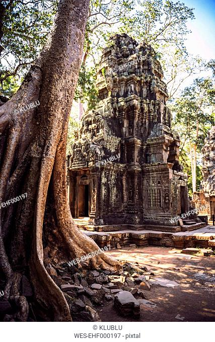 Cambodia, Ruin of Temple in Angkor Thom
