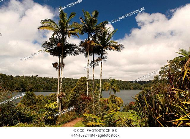 Lake Barrine, lake, crater lake, volcano, volcano crater, Crater Lakes, National park, Atherton, Tablelands, Queensland, palms, nature, rest, holidays, vacation