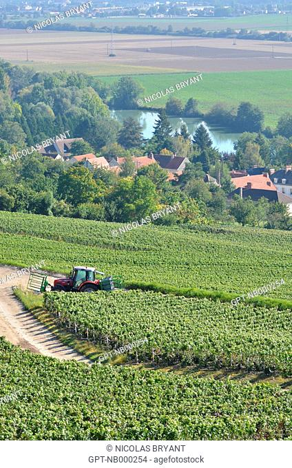 CARING FOR THE GRAPEVINES, VINEYARDS OF CHAMPAGNE, ESSOMES-SUR-MARNE, AISNE 02, FRANCE