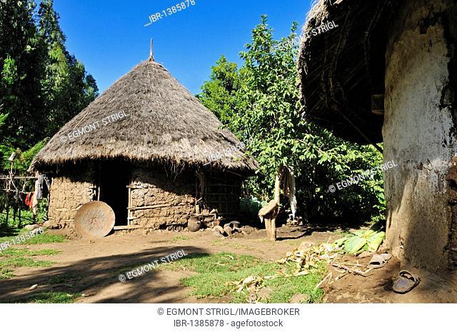 Traditional African hut, grasshut, farmhouse, Gojo, Rift Valley, Oromia, Ethiopia, Africa