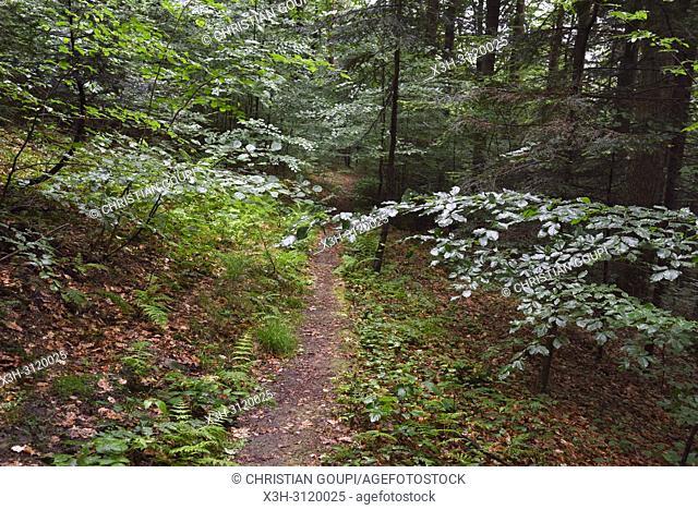 forest path near Iwkowa village, Brzesko county, Malopolska Province (Lesser Poland), Poland, Central Europe
