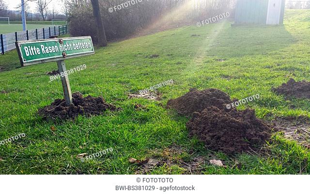 European mole, Common mole, Northern mole (Talpa europaea), sign 'keep off the grass' in a molhill at the edge of a football field, Germany