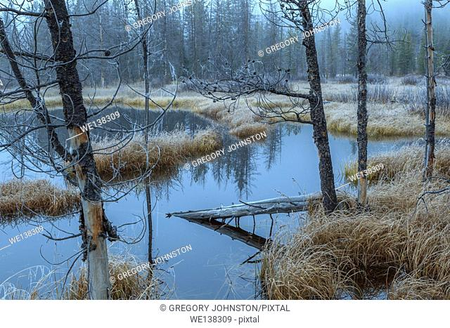 Early morning fog surrounds the marsh land near Stanley Lake in Idaho