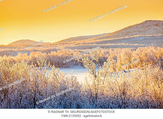 Sunset and trees in the frozen landscape, cold temperatures as low as -47 celsius, Lapland, Sweden