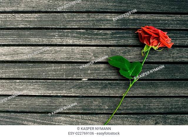 Red rose on dark wood background