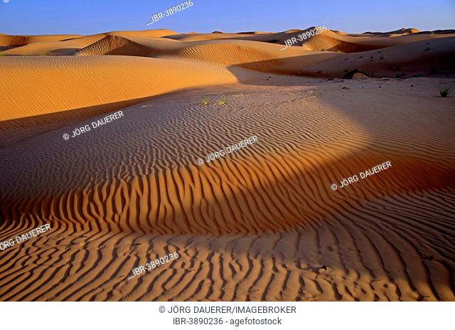 The sand dunes of the Wahiba Sands desert, also known as Ramlat al-Wahiba or Sharqiya Sands, in evening light, Hawiyah, Ash Sharqiyah, Oman