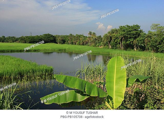 Scenic beauty Manikganj, Bangladesh September 2008