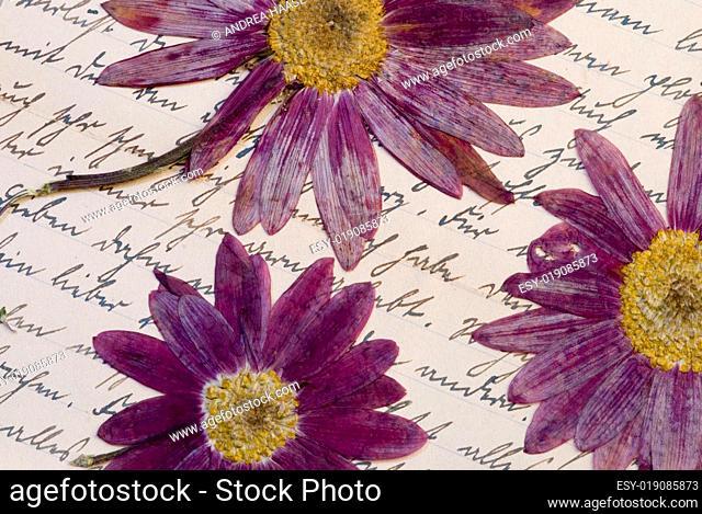 Stilleben mit gepreßten Blumen