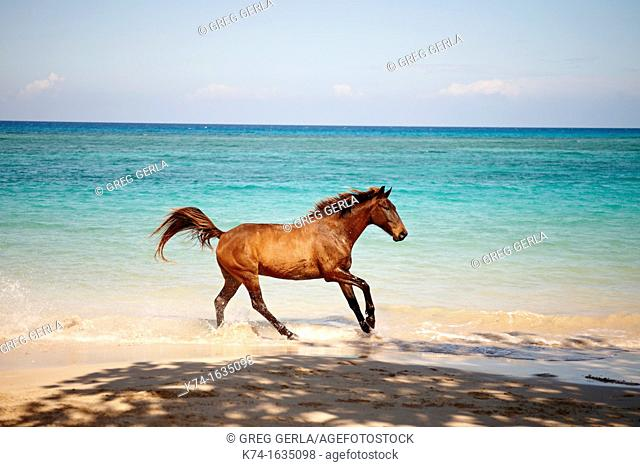 Horse in the ocean on a Caribbean beach