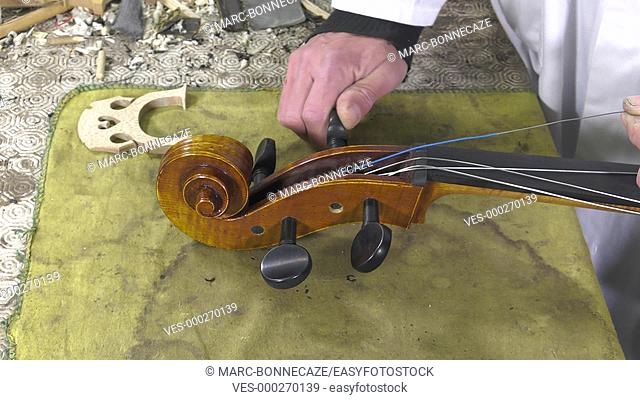 luthier positions the strings and the easel