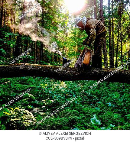 Beekeeper with bee smoker in forest, Ural, Bashkortostan, Russia