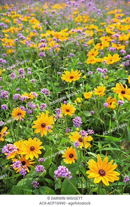Outdoor flower display at the Niagara Parks Greenhouse near Table Rock, Niagara Falls, Ontario, Canada