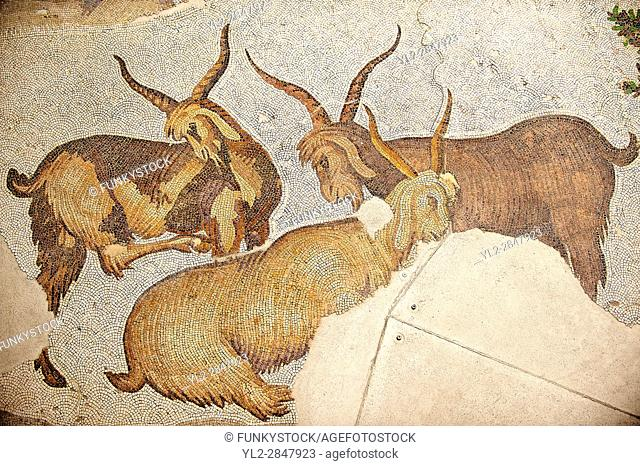 6th century Byzantine Roman mosaics of goats from the peristyle of the Great Palace from the reign of Emperor Justinian I. Istanbul, Turkey