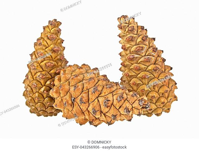 Group of pinecones on a white background