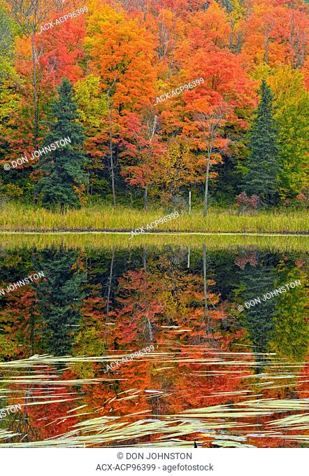 Autumn reflections in Henvey Inlet, near Key River, Henvey Township, Ontario, Canada