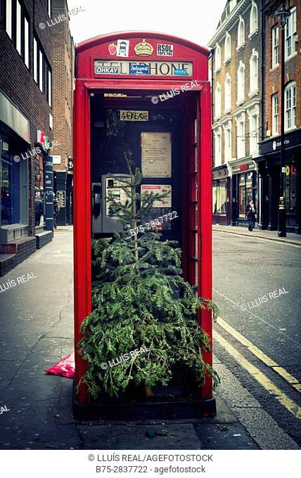 Primer plano de una cabina telefónica roja con un árbol de navidad dentro. Soho, Ciudad de Westminster, West End, London, UK. Europa