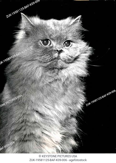 Nov. 25, 1958 - Today 'star' tomorrow 'tramp' : 'Morice' a valuable Swiss platinum cat was photographed during the International cat exhibition in Munich (our...