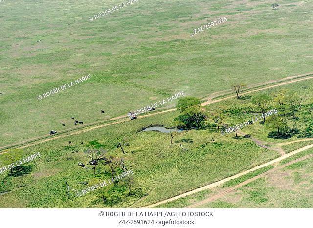 Aerial view of safari vehicles viewing African bush elephant (Loxodonta africana). Serengeti National Park. Tanzania