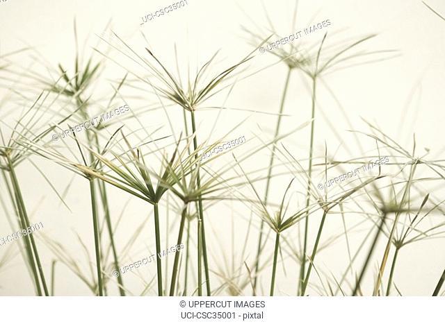 Close-up of grasses