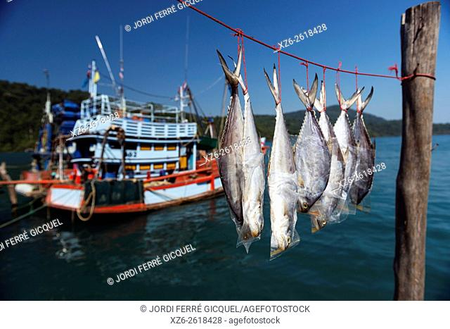 Fish drying in the sun in Ban Ao Yai, fishing village on Koh Kood island, Ko Kut district in Trat Province, Thailand, Asia