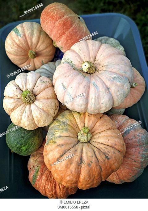 Varied pumpkins