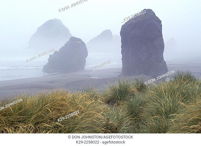 Sea stacks and fog, Boardman State Park, Oregon, USA