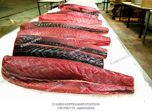 New York City, USA. Freshly made tuna fish filets on display at the New Fulton Fish Market, Hunts Point, The Bronx