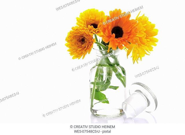 Marigold flowers in vase, Calendula Officinalis, close-up