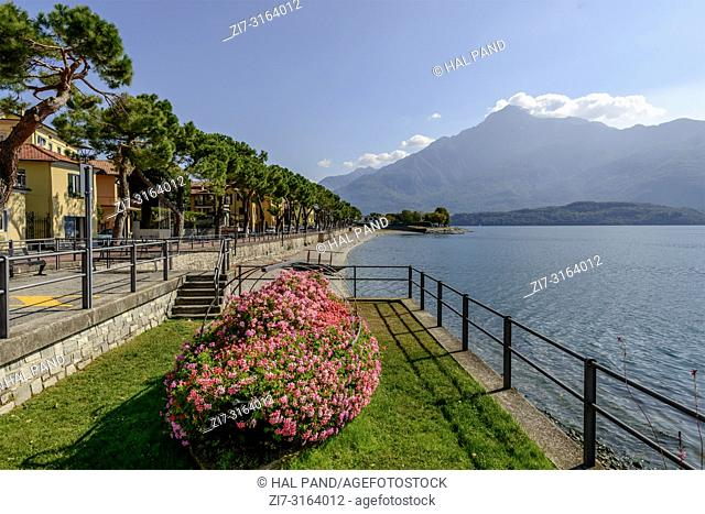 """blossoming flowerbed and tree lined """"""""Regina"""""""" road crossing historical touristic village on Lario lake, shot in bright fall light at Domaso, Como, Italy"""