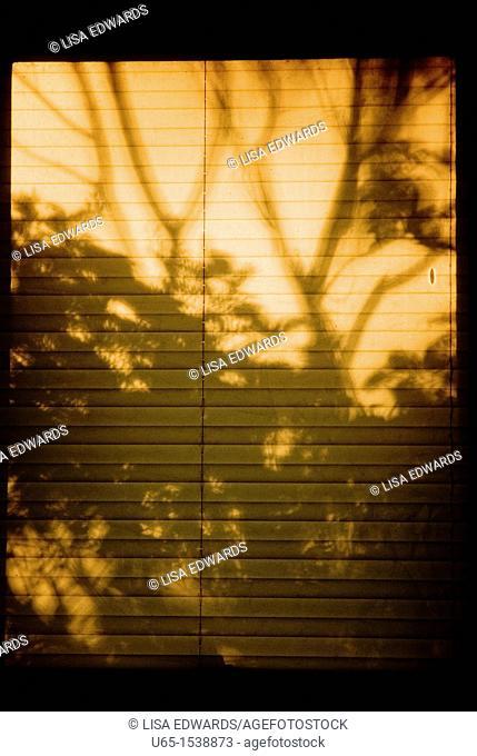 Shadows through the blinds