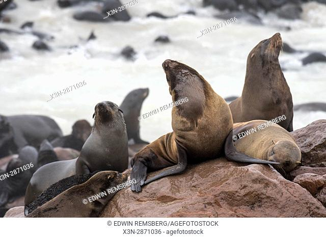 Cape fur seals on the rocks of the Cape Cross Seal Reserve, located in Namibia, Africa