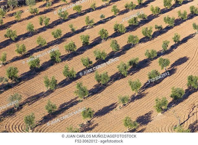 Dry farming, Torres del Segre territory, Baix Segre, Lleida, Catalonia, Spain, Europe