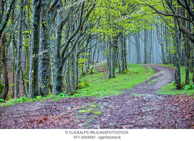 Path in the forest, Foreste Casentinesi NP, Emilia Romagna district, Italy