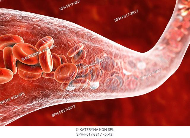Blood vessel with blood cells, computer illustration. Red blood cells and white blood cells inside a blood vessel