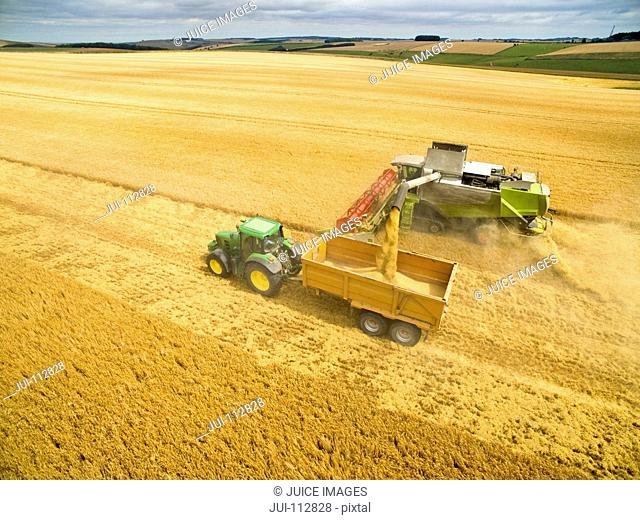 Aerial view of combine harvester filling tractor trailer in golden barley field
