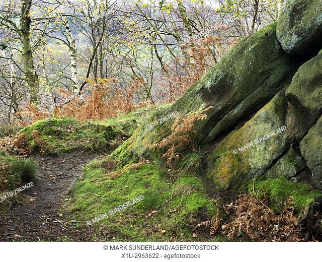 Gritstone Rocks at Birk Crag in Autumn Birk Wood Harrogate Yorkshire England