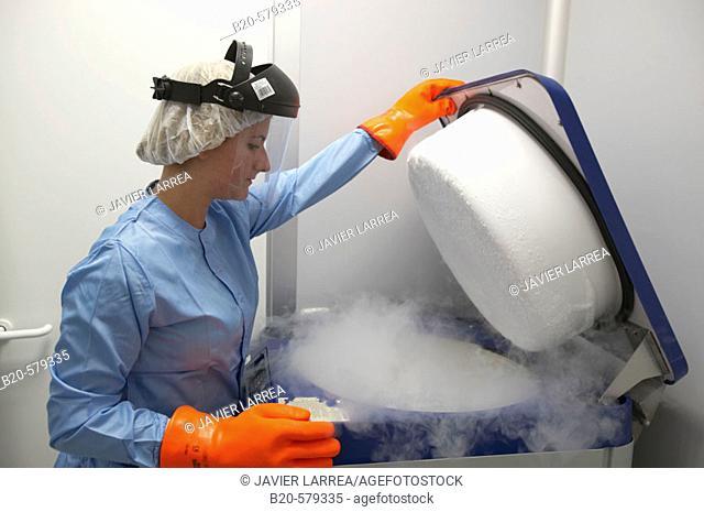 Cryogenic Procedures/Cryopreservation/storage of samples in liquid nitrogen tank. Laboratory, Fundación Inbiomed, Genetrix Group