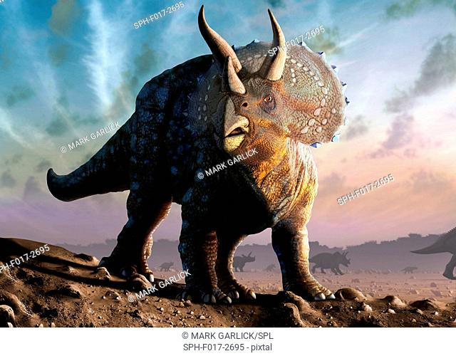 Artwork of a triceratops horridus dinosaur. These animals were common in the late Cretaceous period, from around 70 million years ago until the extinction of...