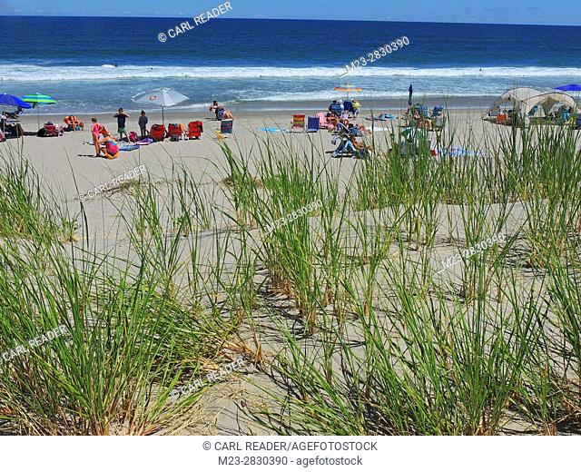 The dune grass looks over a scene of sea, sun bathers and sand, Avalon, New Jersey, USA