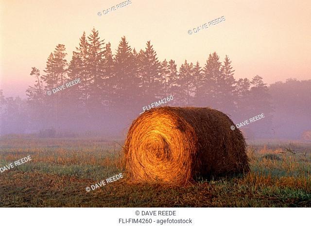 Hay Rolls, near St. Adolphe, Manitoba
